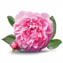 Hydrolat de Rose de Damas Bio Bioflore - Ma Planète Beauté