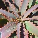Aloe Vera Poudre - MA PLANETE BEAUTE