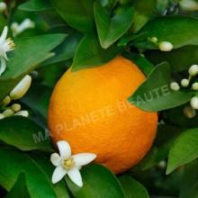 Poudre d'Orange - MA PLANETE BEAUTE