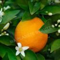Poudre d'Orange 100gr.