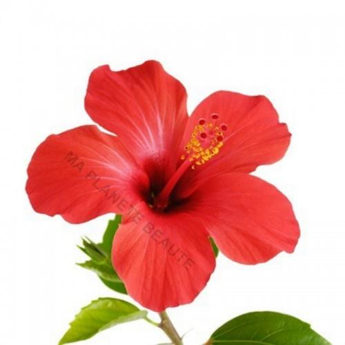 Poudre d'Hibiscus du Maroc - MA PLANETE BEAUTE