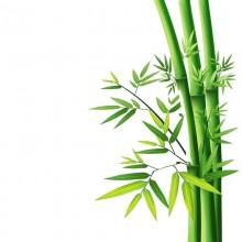 Hydrolat de Bambou Bio