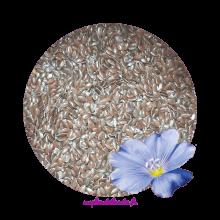 Graines de Lin Biologiques