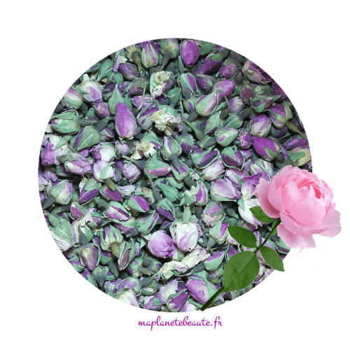 Boutons de Rose Pâle - MA PLANETE BEAUTE