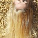 """Coloration Végétale Biologique """"Golden Blonde"""" (Blond Doré) - Cultivator's Colors From Nature"""