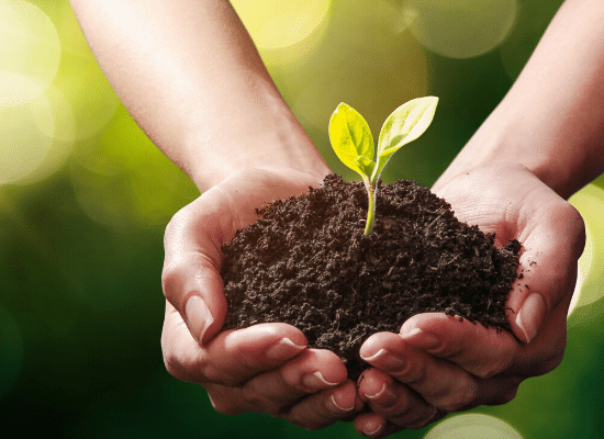 Ecologie | MA PLANETE BEAUTE