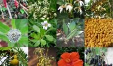 Les diverses utilisations de Herbal Haircare aux 17 plantes ayurvédiques