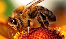 Propolia, les produits de la ruche